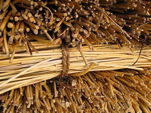 stem bark and fiber